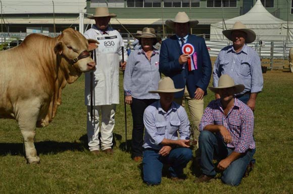 Beef Australia 2018 - Grand Champion Male, Cordelia Kingswood, Cordelia Charbrays.