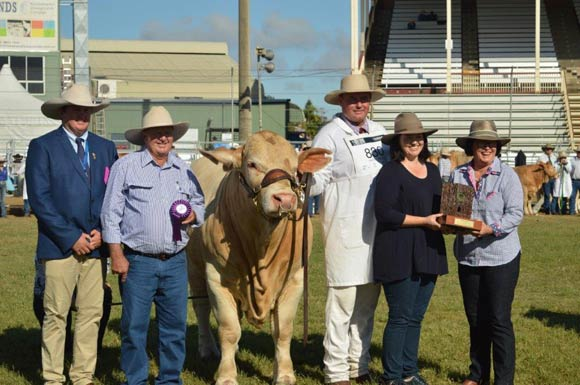 Beef Australia 2018 - Junior Champion Male Cordelia Kingswood, Cordelia Charbrays.