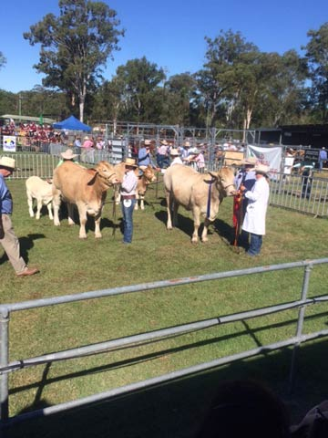 Class 16 Female 30 months over First - Kandanga Valley Jonty
