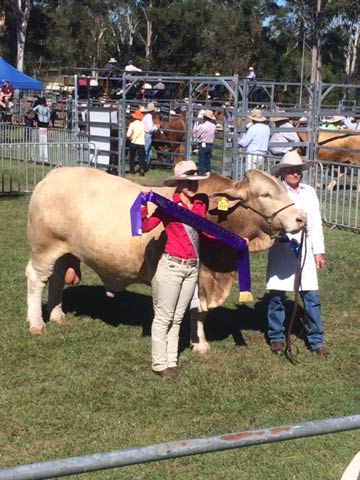 Senior Champion Bull - Kandanga Valley Jesuit