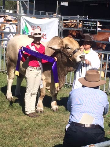 Junior Champion-Bull - Diamond L Kando