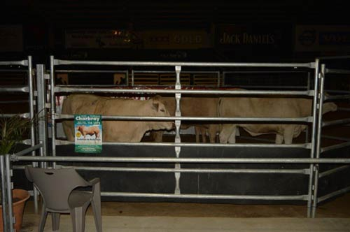5th Annual Elite Heifer Auction