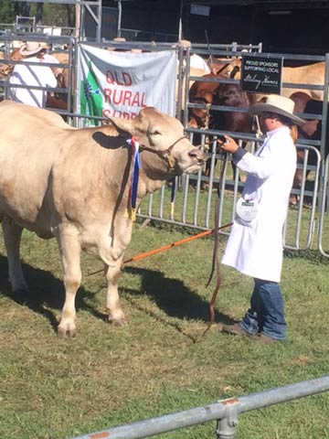 Grand Champion Female Kandanga - Valley Jonty