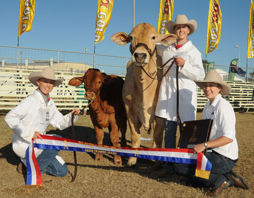 Beef Australia 2012 Grand Champion Female Geneva Frisky
