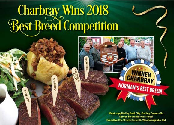 Charbray Best of Breed.