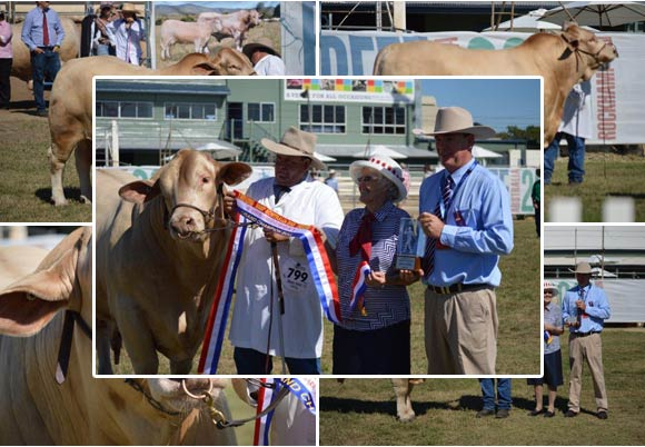 Beef Australia 2015 Grand Champion Bull - Huntington Jeremiah