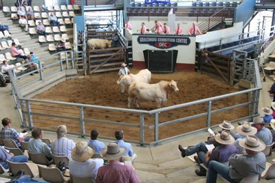 32 nd National Charbray Bull and Female Sale.