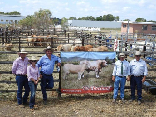 Inaugural Reef to Ranges Invitational Bull Sale - 27th November 2016, Bowen Qld