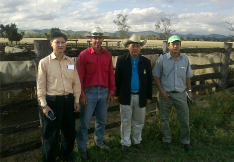Thai Officials Inspect Heifers at Rosewood Charbrays.